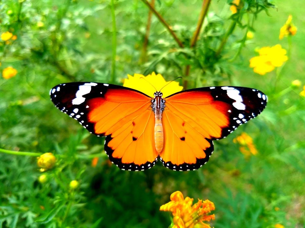 Mơ thấy con bướm